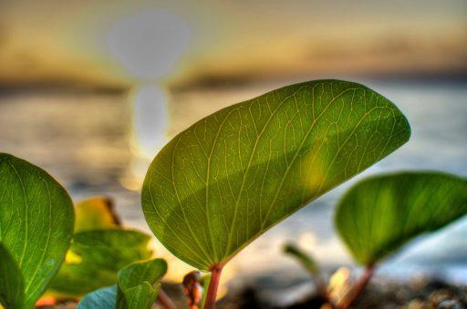 Untitled (Leaf)