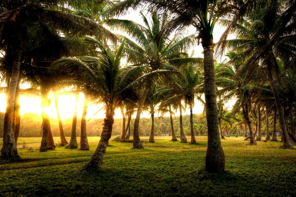 In the Coconut Garden