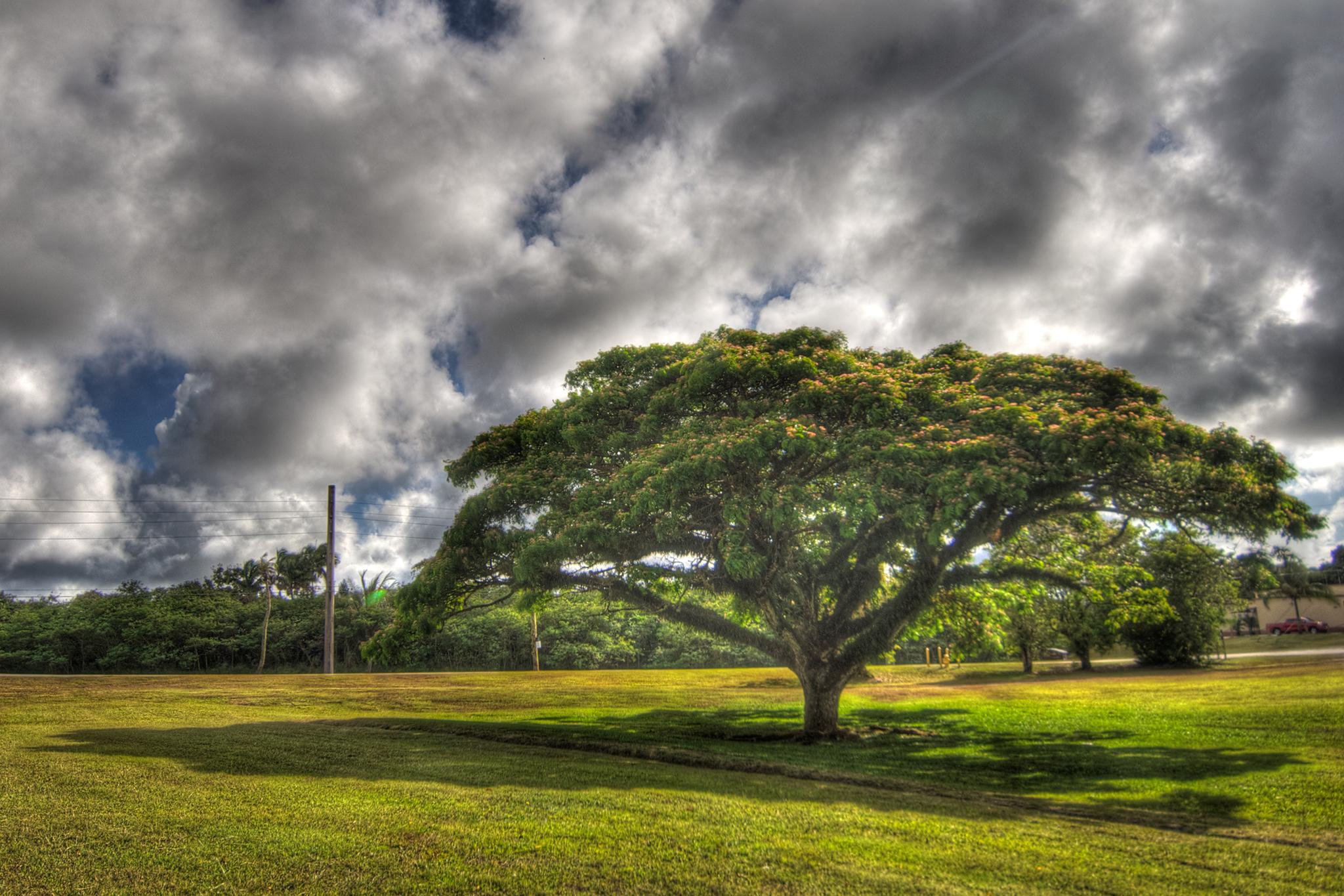 Nimitz Tree