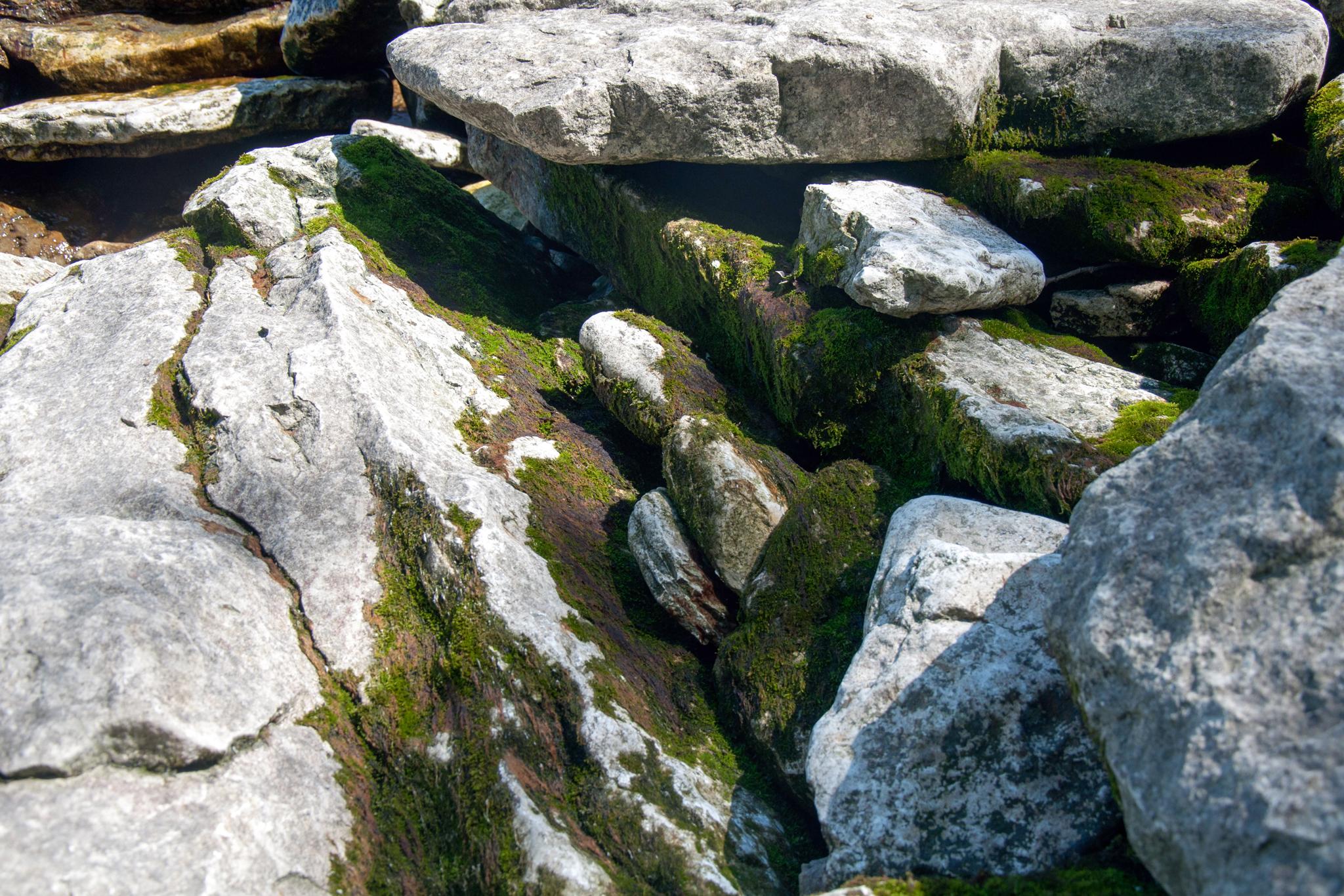 Rocks at Marblehead (May 2010)