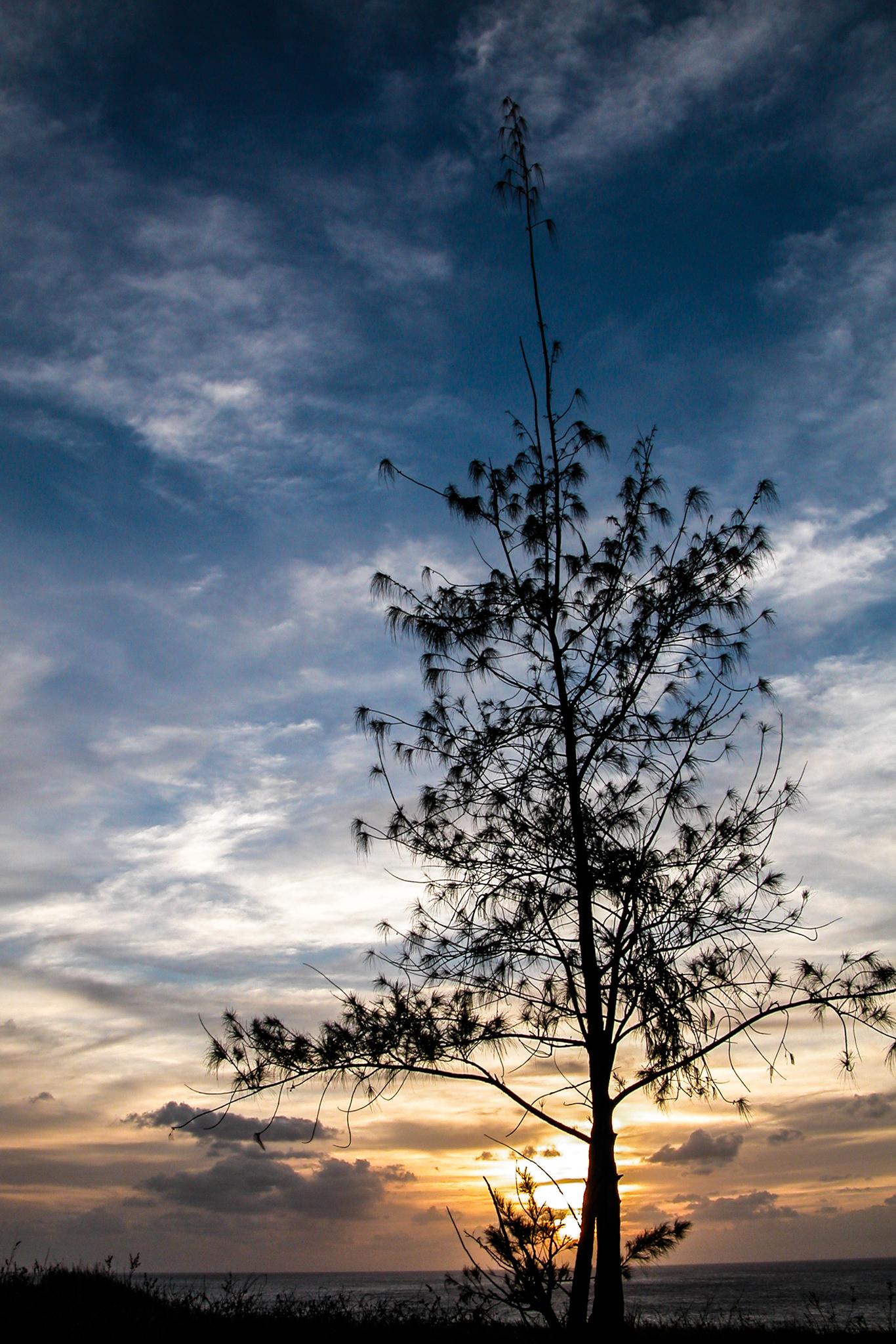 Umatac Tree (February 2003)