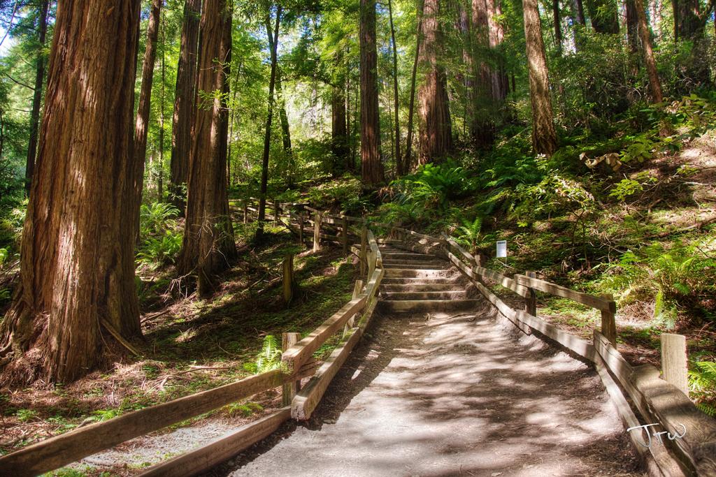 Muir Path