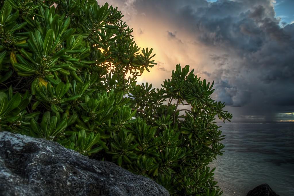 Untitled Tree