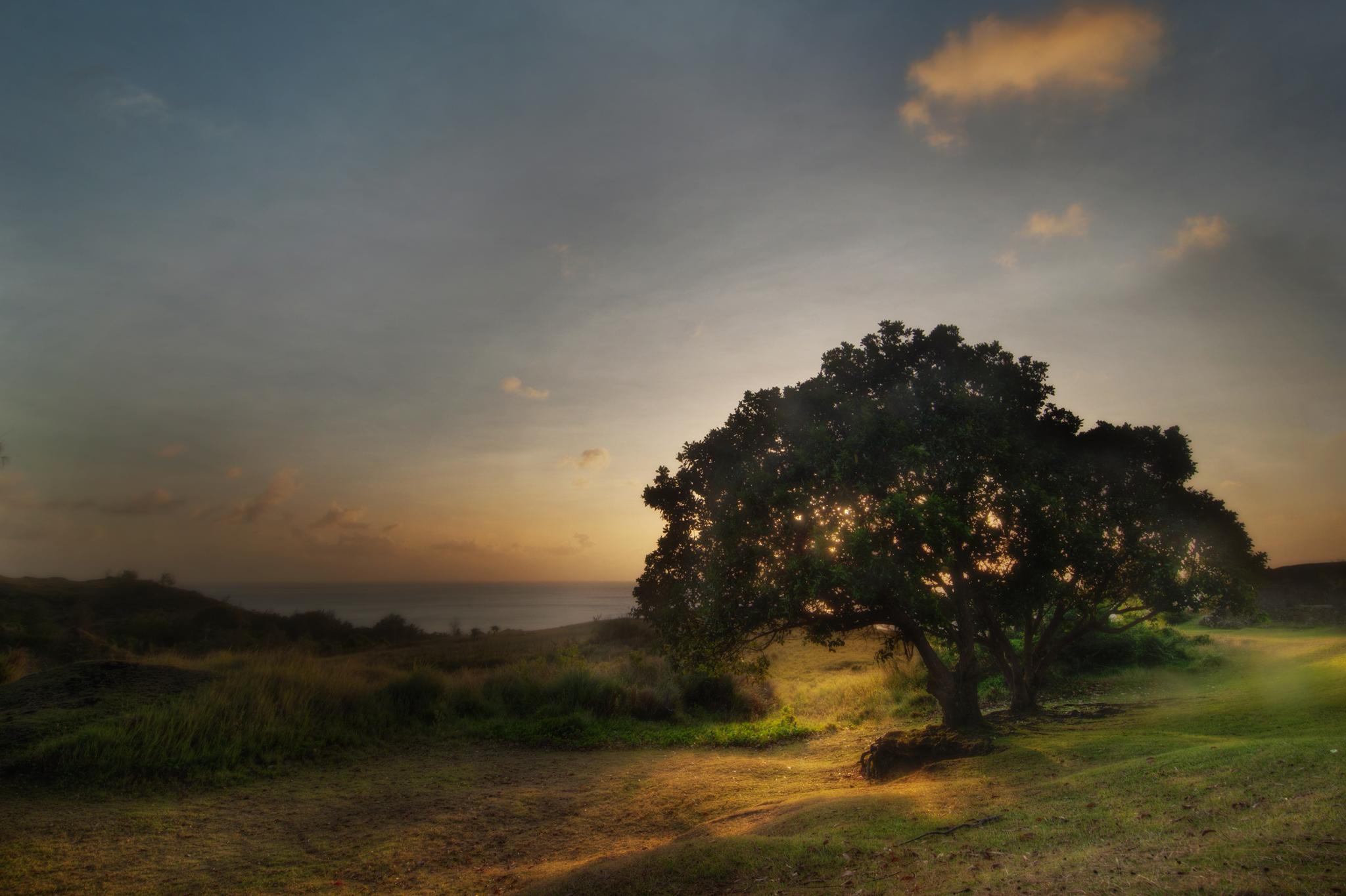 Umatac Tree