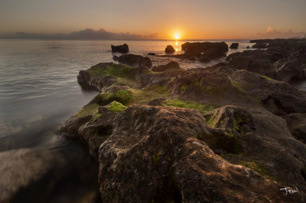 Toguan Bay Algae